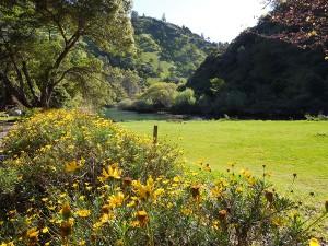 Beach East Daffodils 20120414